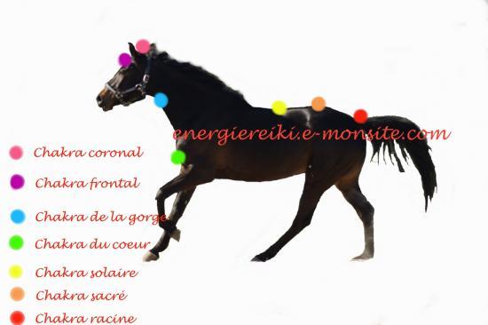 chakra-chevaux-1280x853.jpg